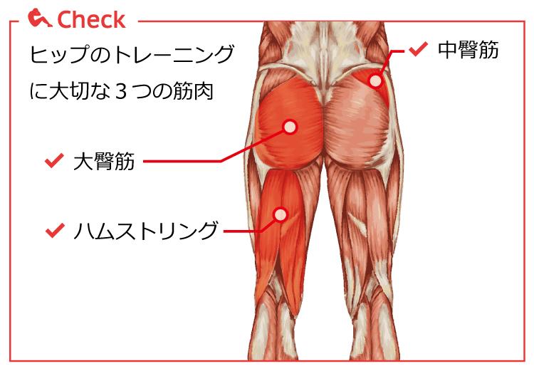 ヒップのトレーニング筋肉
