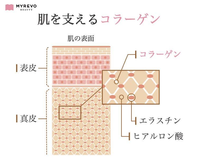 肌を支えるコラーゲンの説明図