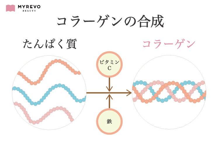 コラーゲンの合成の経緯図