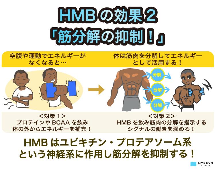 HMBの効果の解説図