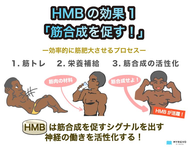 HMBの効果1