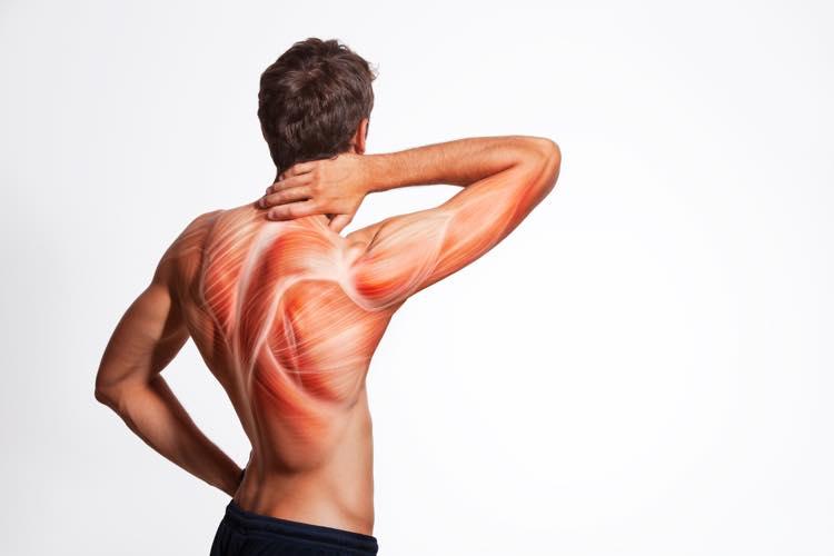 筋繊維のイメージ