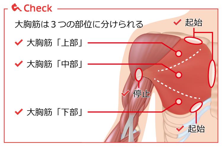 """「大胸筋 上部」の画像検索結果"""""""