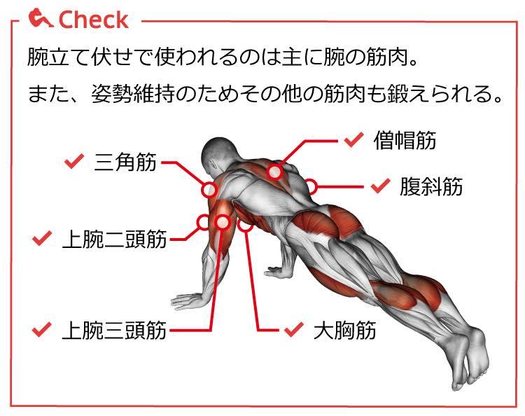 腕立て伏せに必要な筋肉