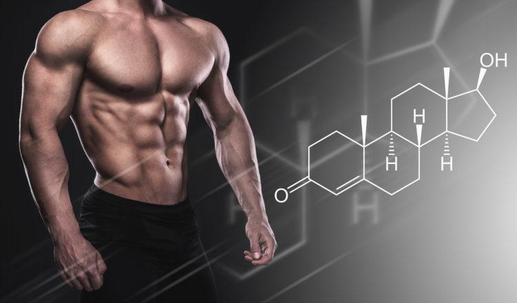 テストステロン 筋肉