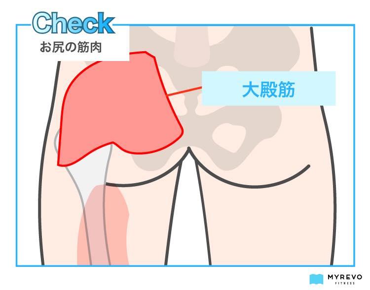 大臀筋(お尻の筋肉)