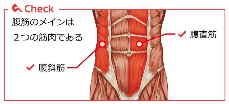 腹筋群の図